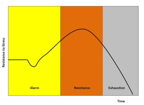 A normal stress response consists of a period alarm in which adreneline production increases and the body begins to show the signs of an acute stress response, a time of resistance or escalation in which the body in fight, flight, or freeze.  Finally, the body enters the exhaustion phase in which the body crashes from the increased adreneline production.